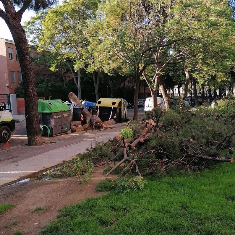 Árbol caido en Miguel Asso - 7MAY21